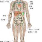 メラノーマ(悪性黒色腫)や乳癌の転移を調べる。センチネルリンパ節シンチの仕組み