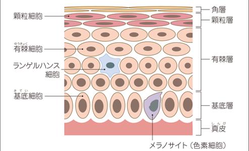 悪性黒色腫(メラノーマ)の種類と特徴