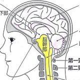 脳の機能低下を数値化する神経心理学的検査による認知症診断